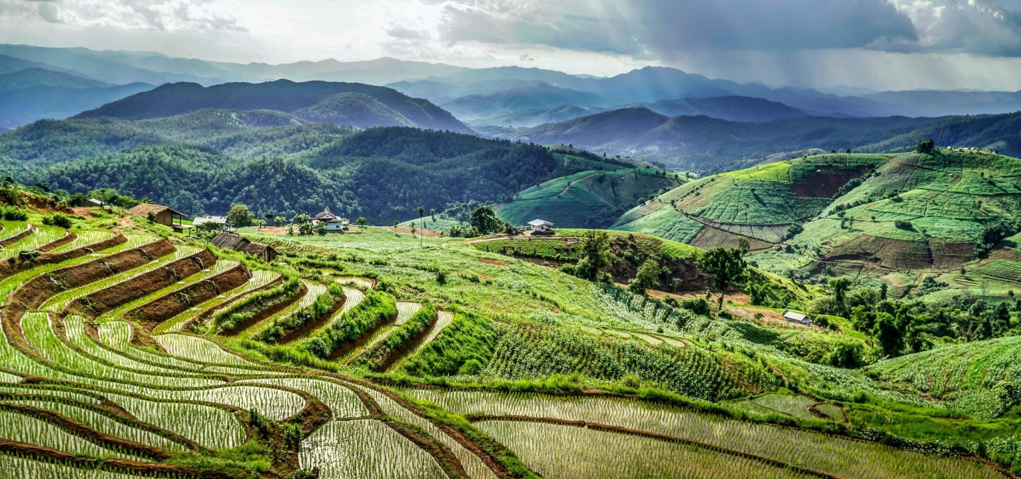 Gröna risfält i Thailand