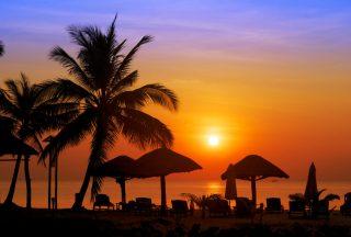Vacker solnedgång bakom palmerna i Vietnam