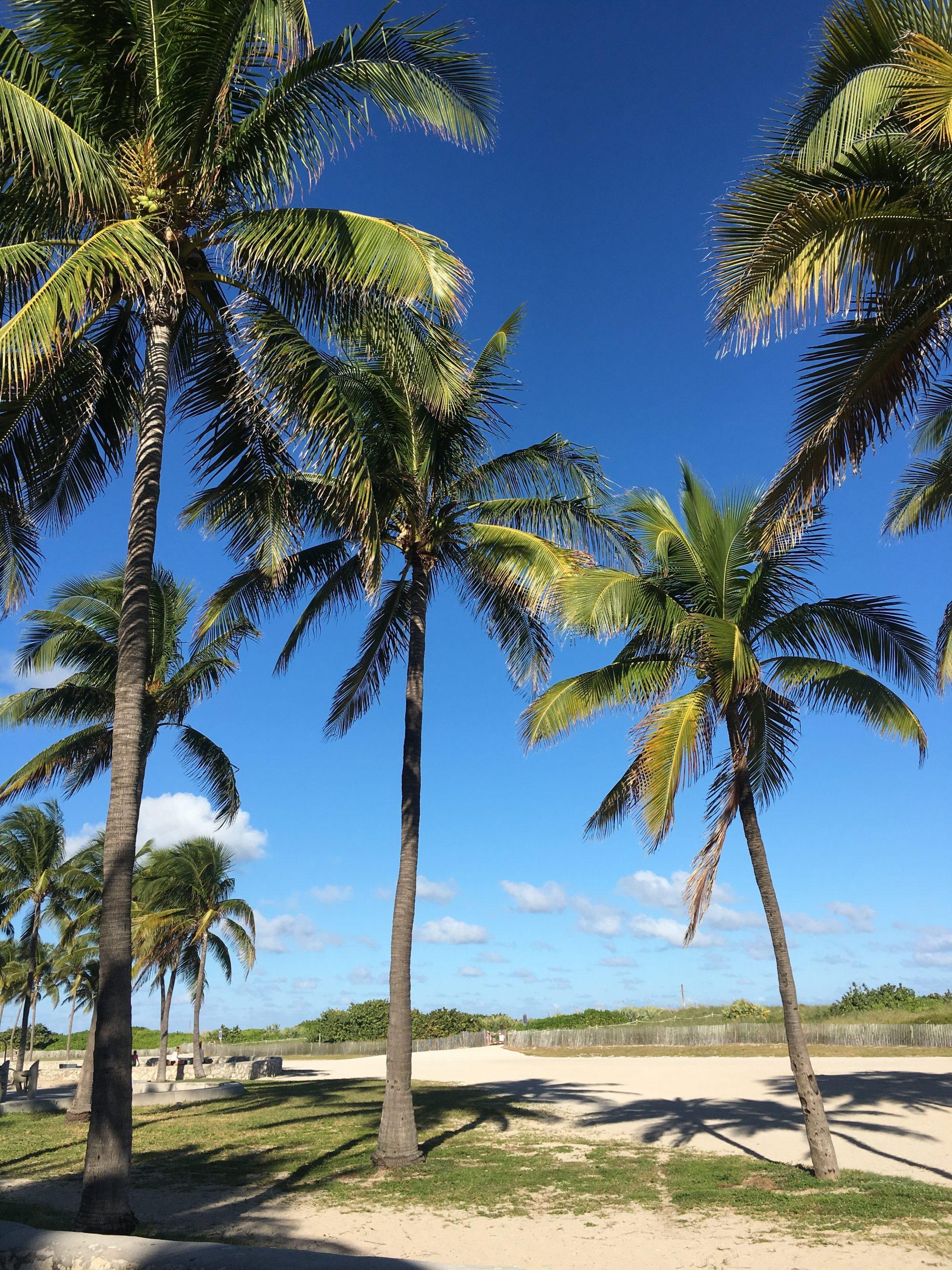 palmer på stranden i miami