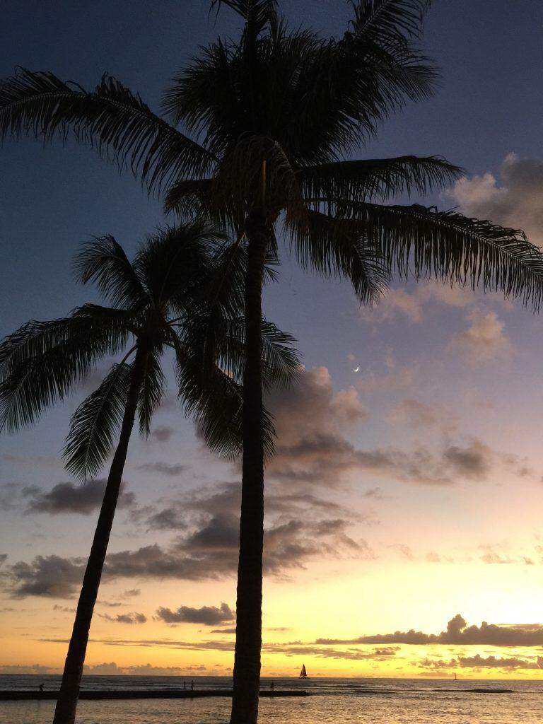 Solnedgång bakom på palmerna på Hawaii