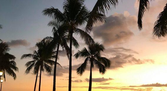 Solnedgång och siluett av palmer på Hawaii