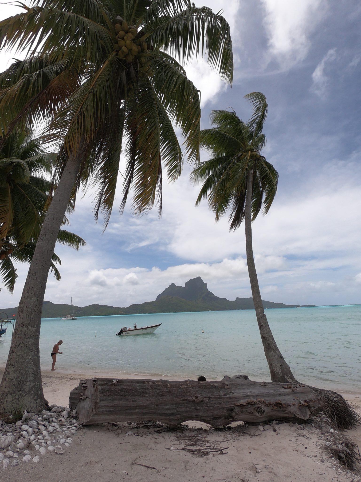 Vajande palmer på sköna Hawaii