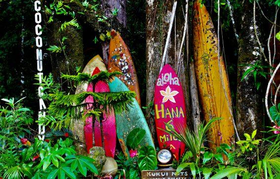 Maui-växter-surf
