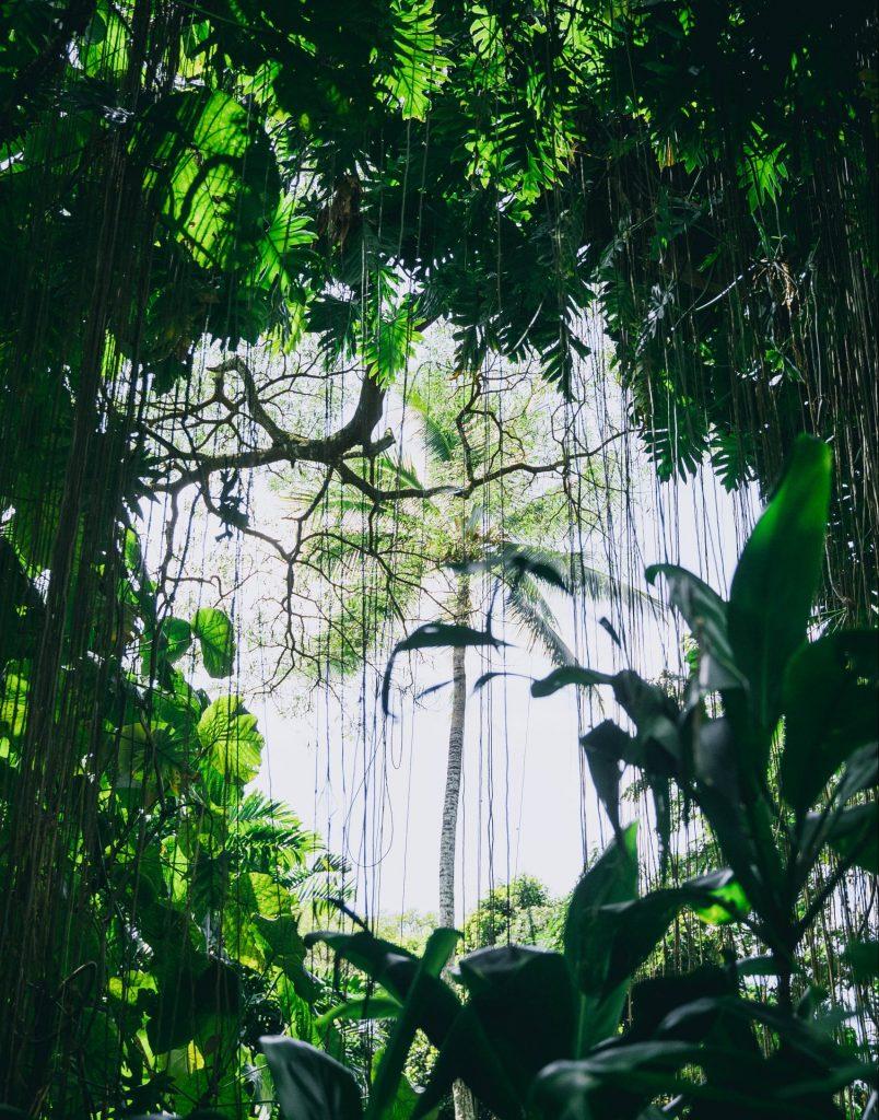 Tät jungel i Kauai ö i Hawaii
