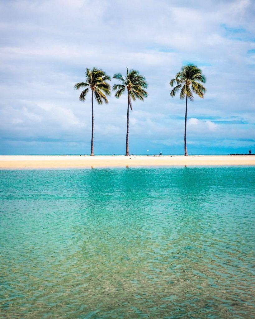 Waikiki Beach vacker strand med palmer