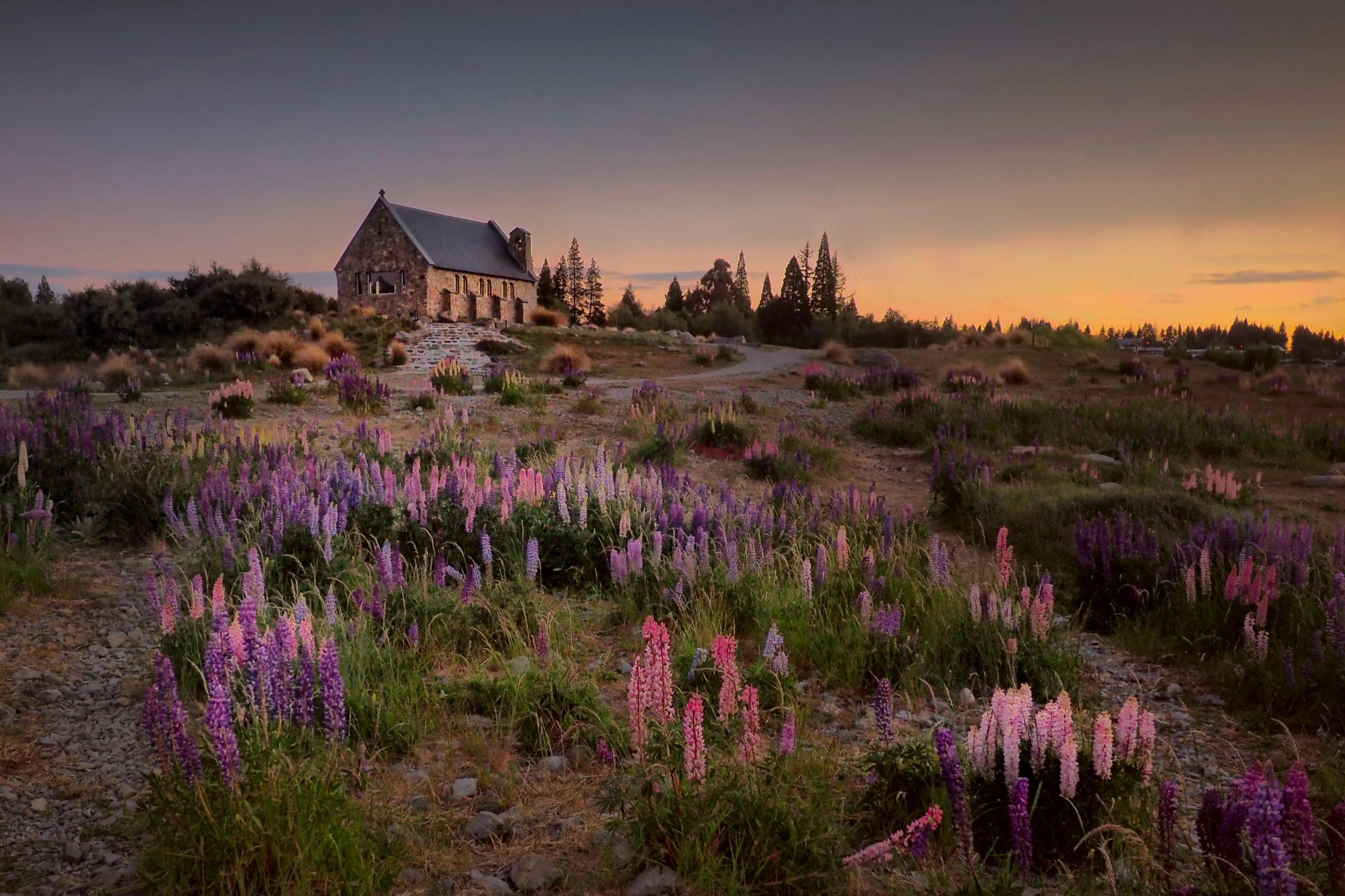 Vacker natur, stuga och blommor, på Nya Zeeland