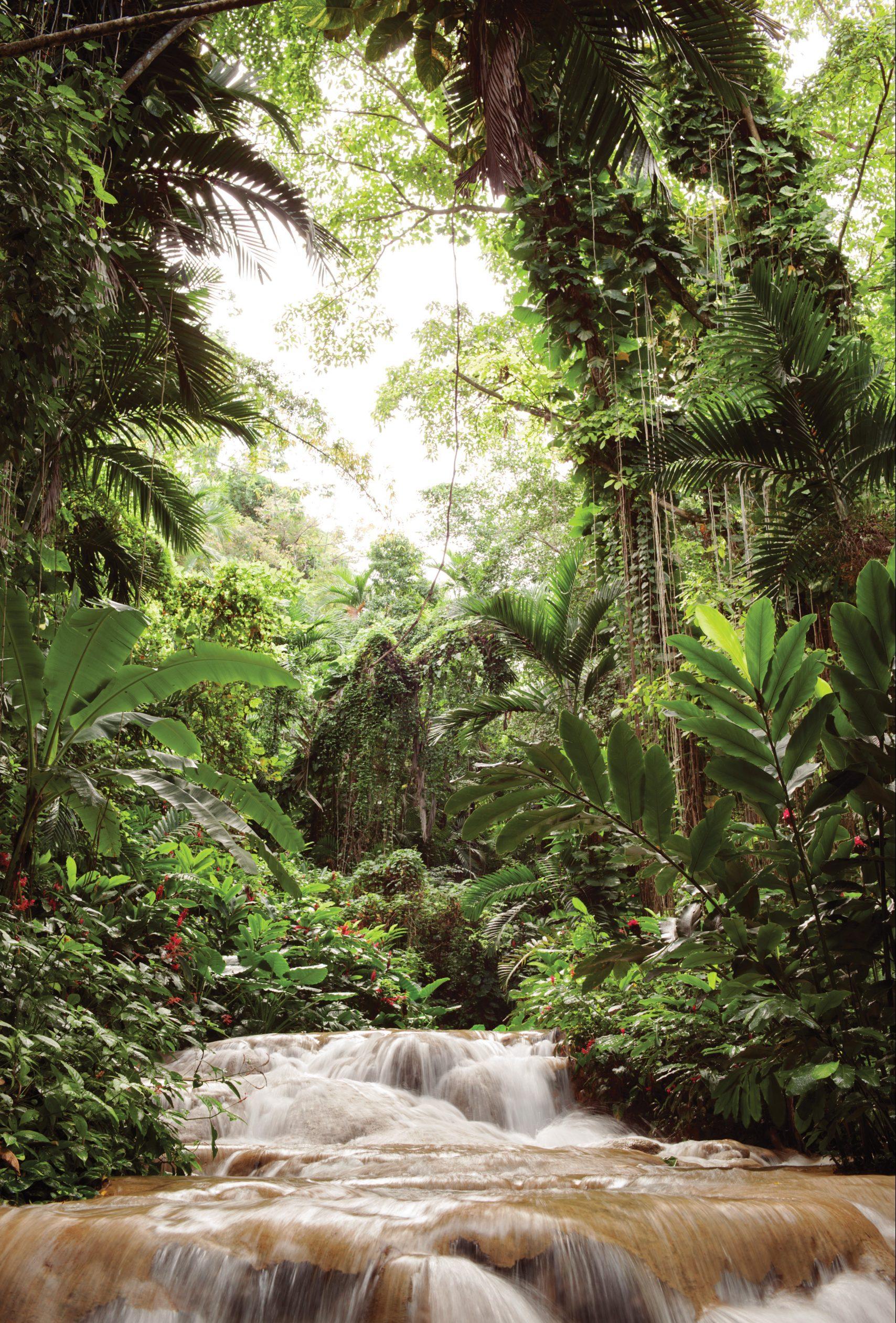 Tropisk djungel och forsande vattenfall på Jamaica