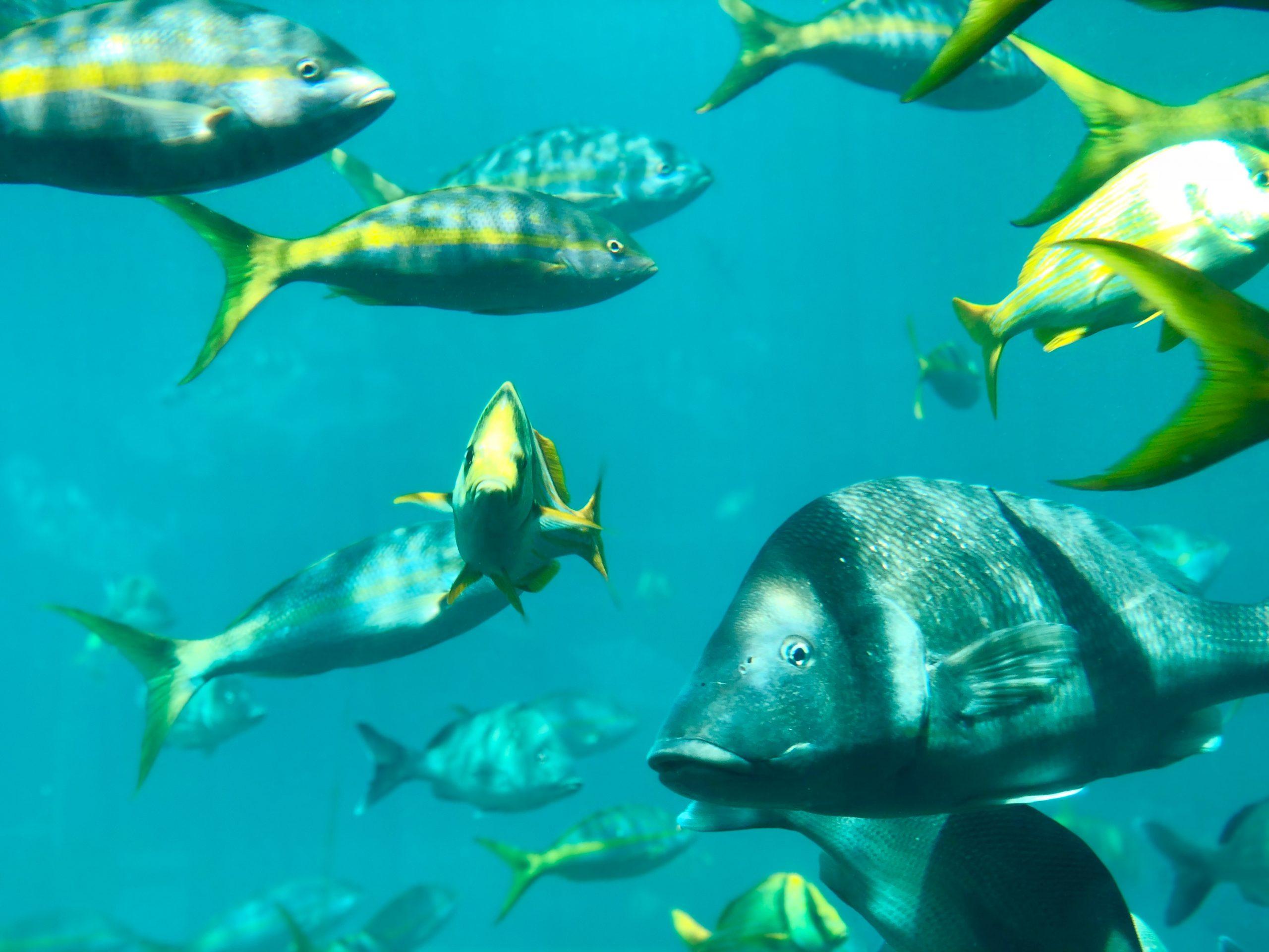 Fiskar i vattnet utanför Bahamas