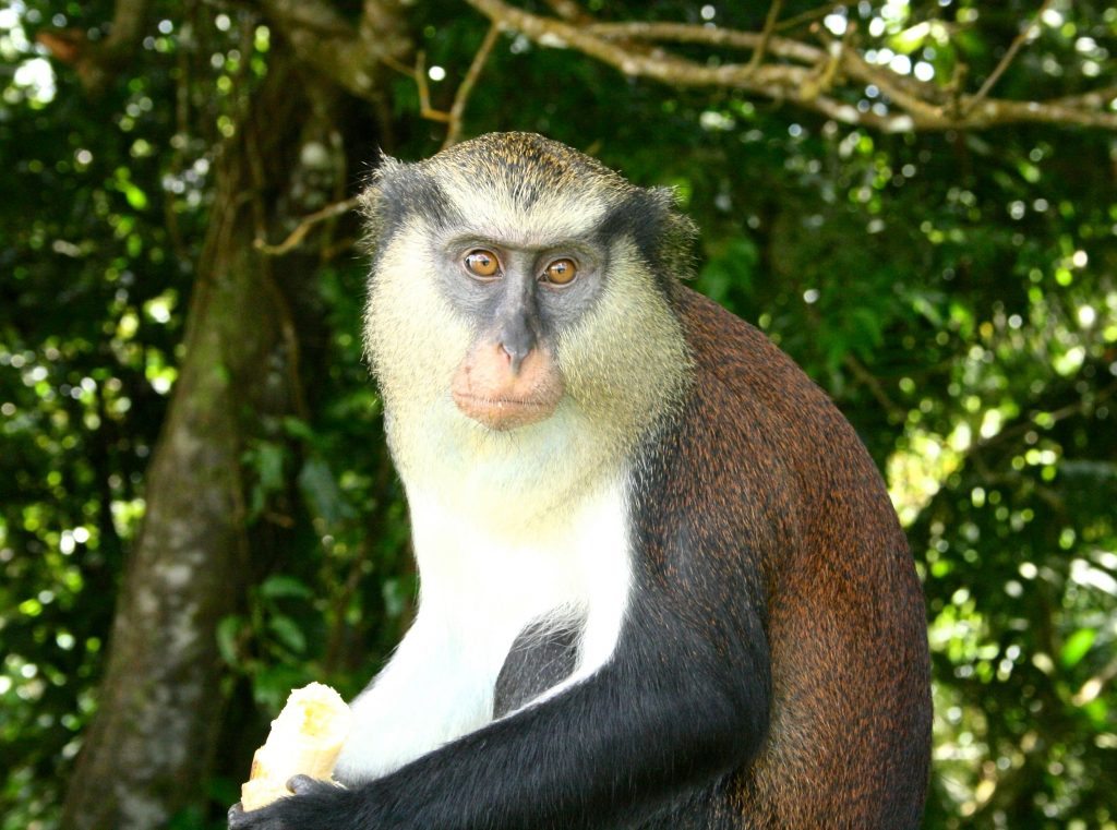 Grenada wildlife
