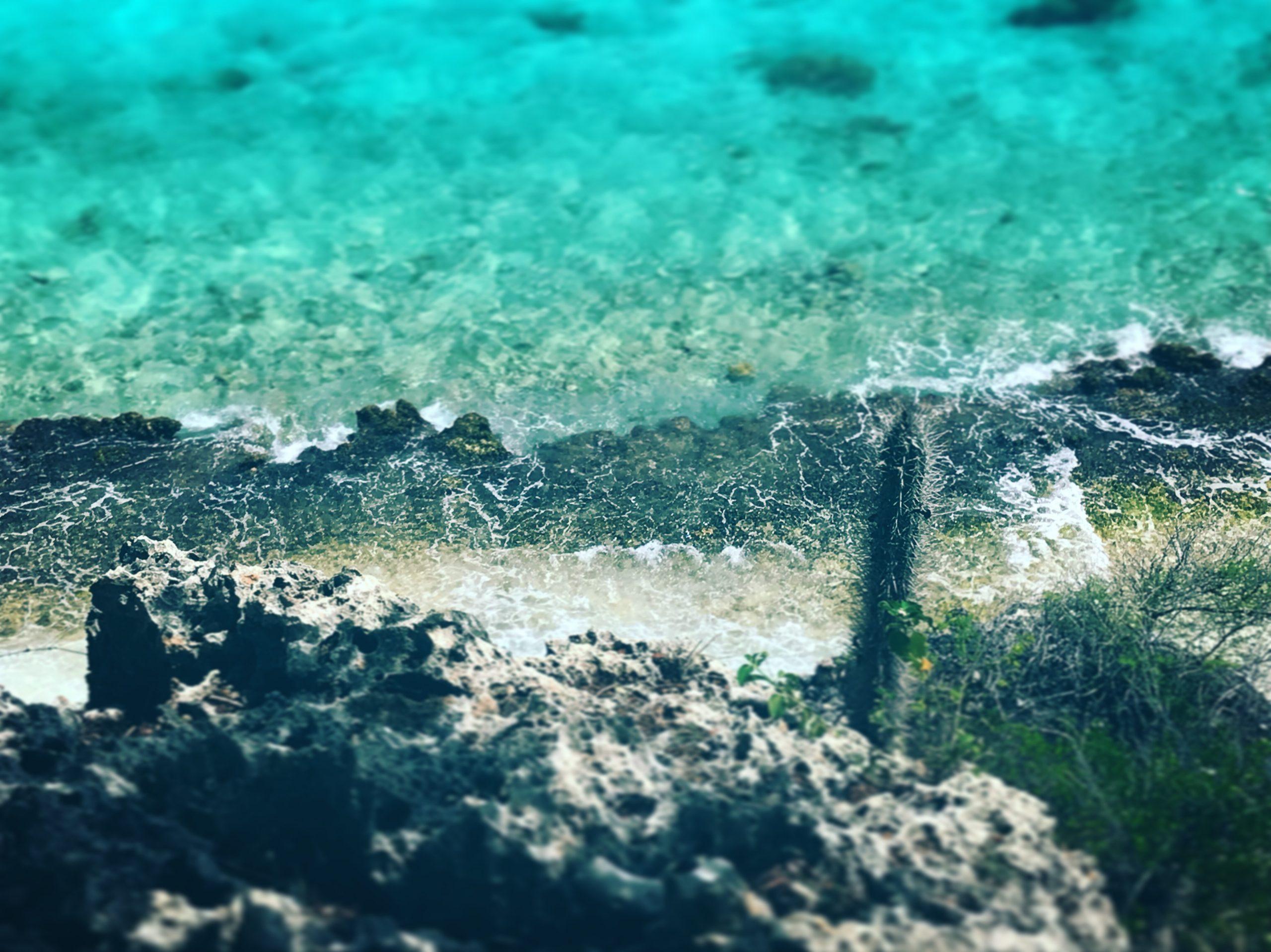 Klippor och fint vatten i Bonaire