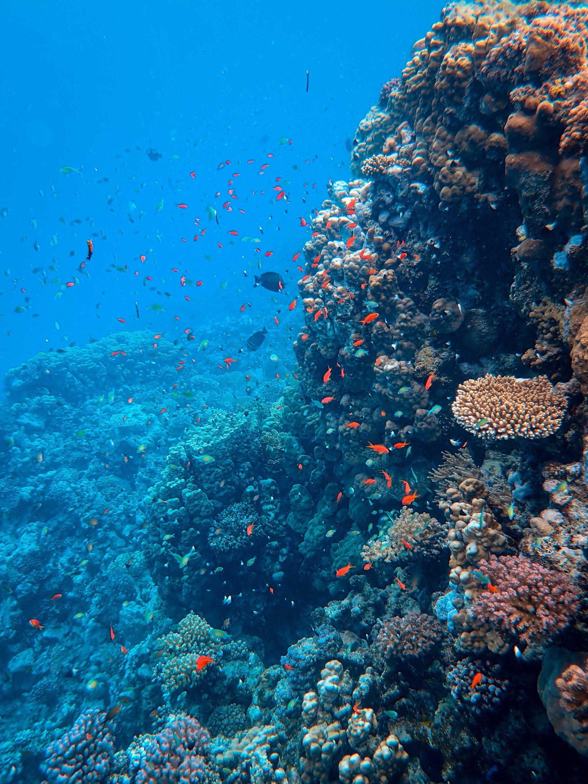Korallrev i havet utanför Bonaire