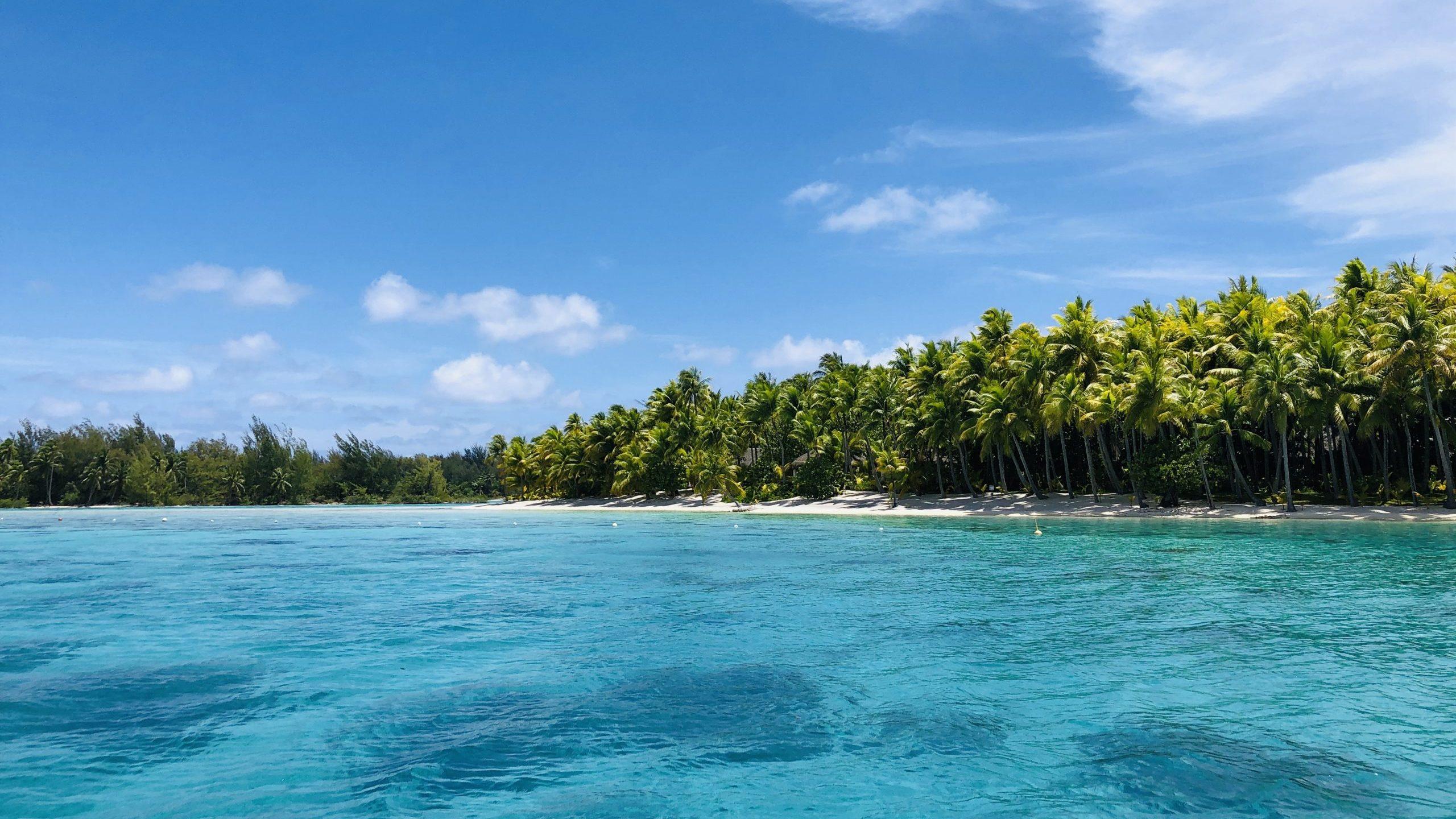 blått hab och gröna växter på ön tahiti