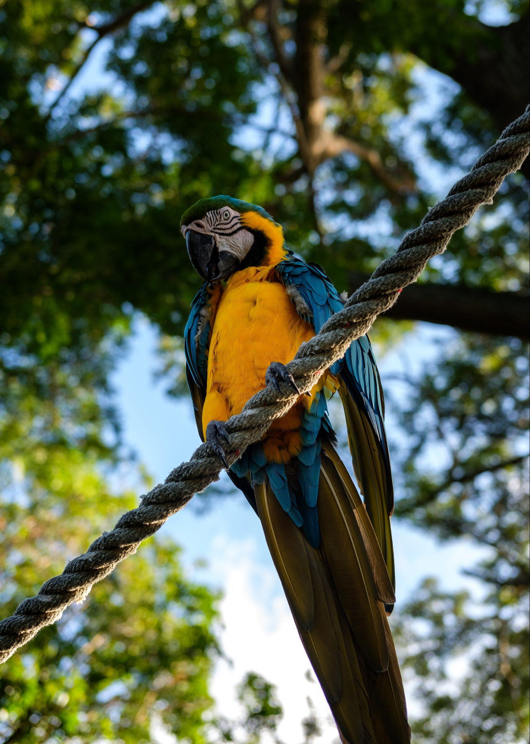 Vacker papegoja i Guadeloupes natur