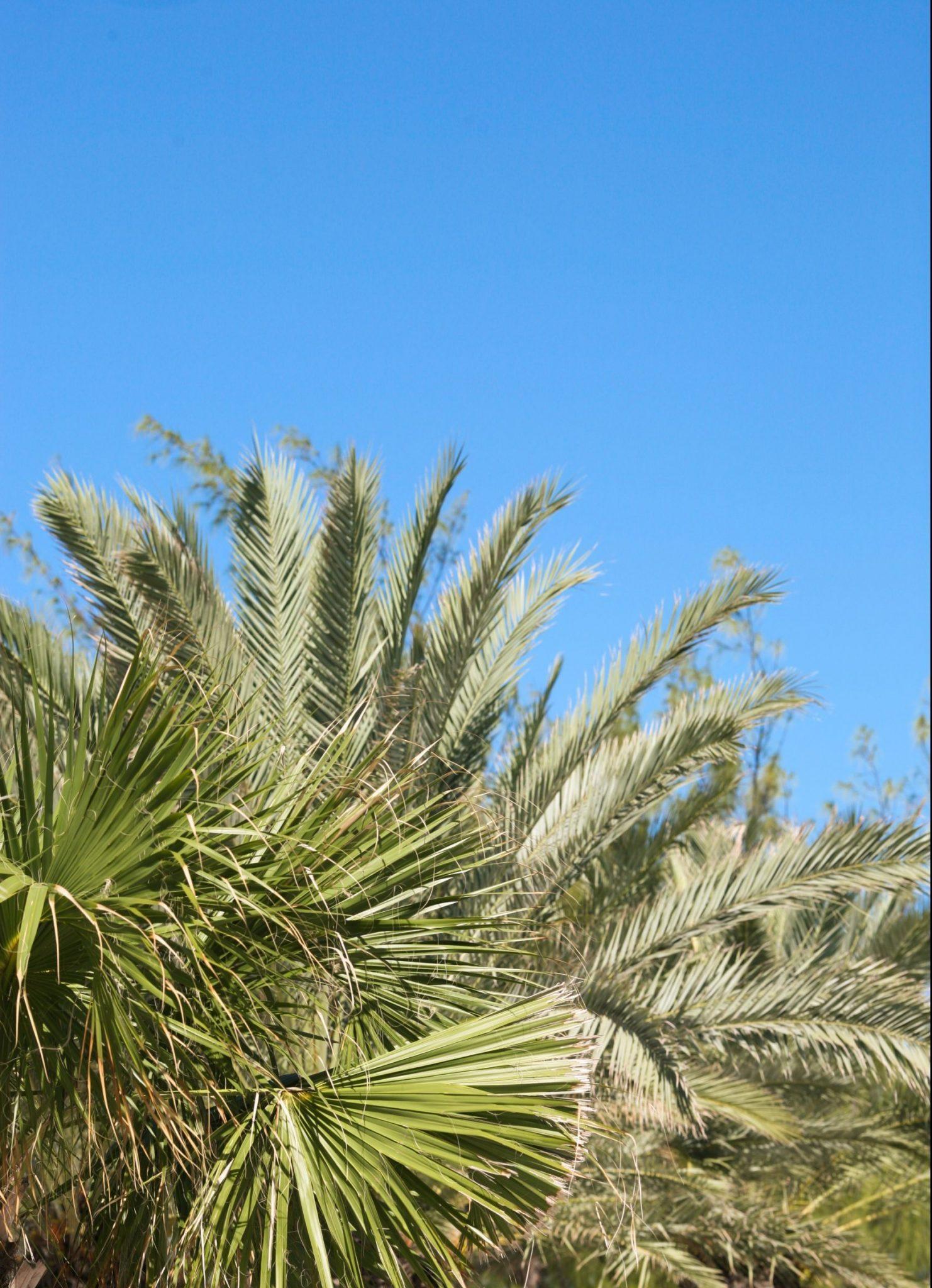 Gröna växter på Grand Cayman