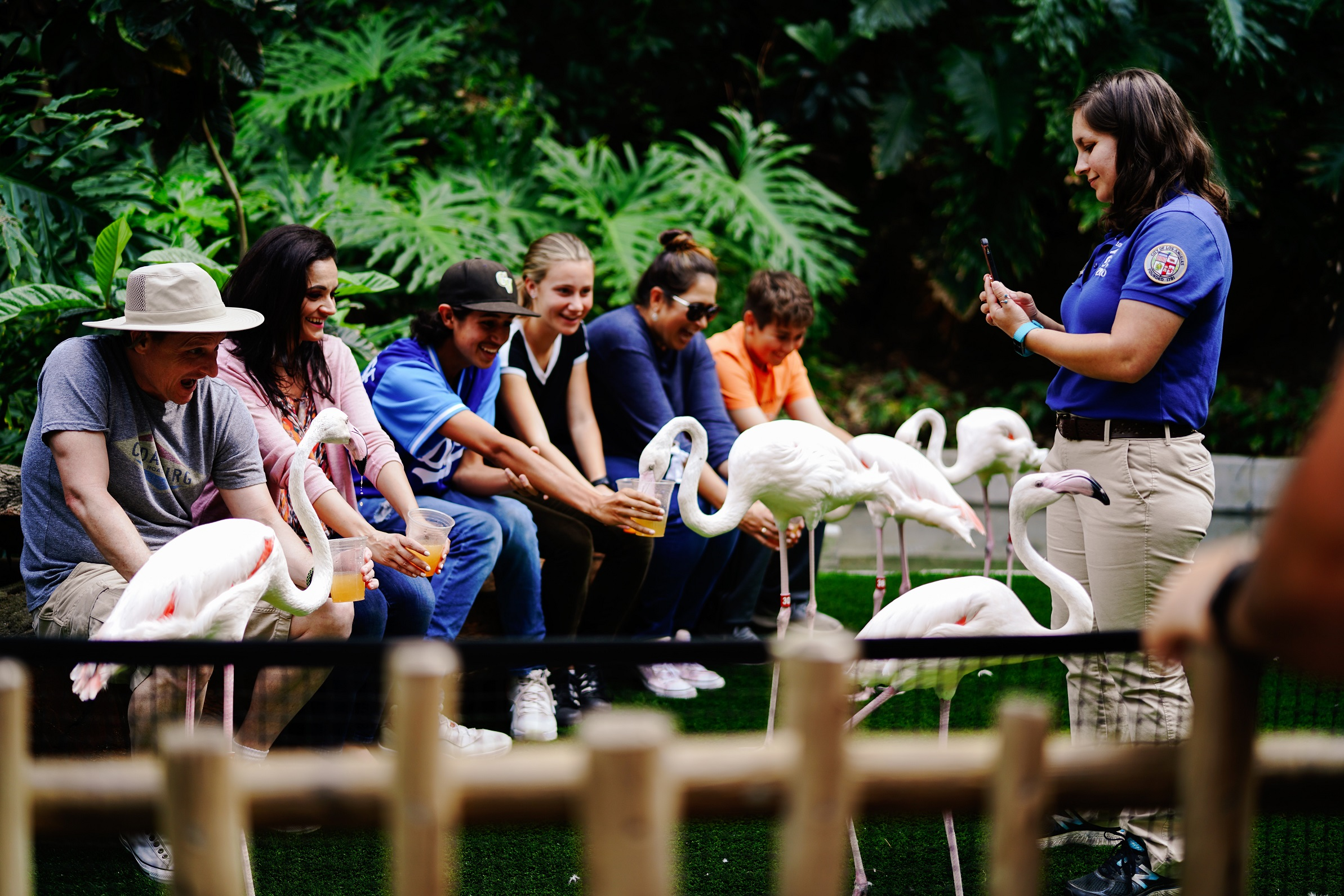 Grupp matar flamingos på zoo