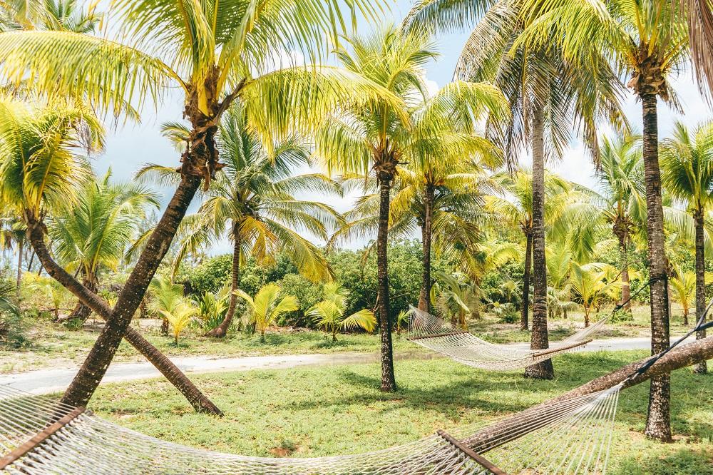 Bamahas-palms.jpg