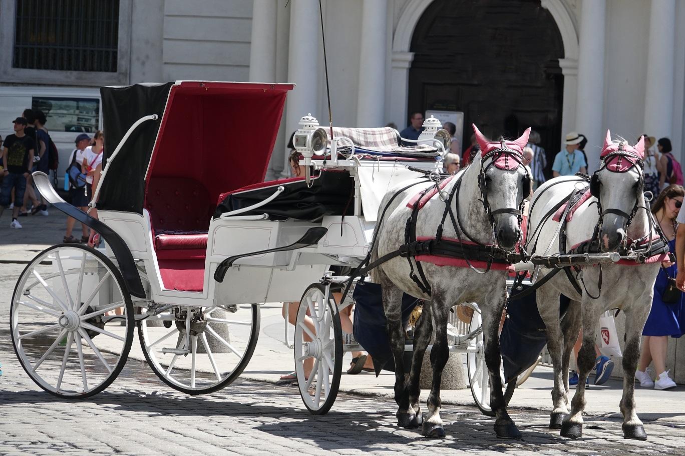 Wien häst och vagn